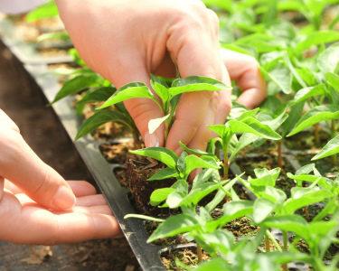Plantas Que se Comem Cruas: Workshop de Germinados e Microvegetais   2h30   Carcavelos