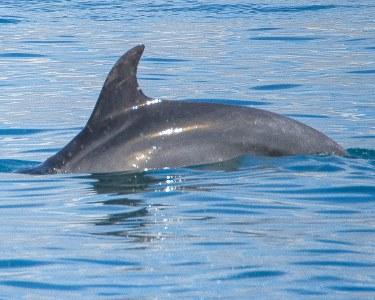 Rota dos Golfinhos no Rio Sado! Cruzeiro Get Zen® - 3h   Criança ou Adulto