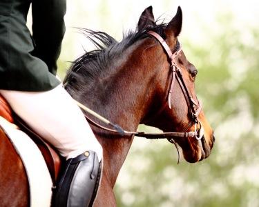 Equitação em Sintra: Aprenda a Andar a Cavalo! 1 Mês de Aulas