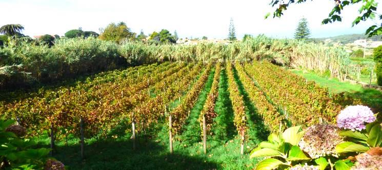 Passeio Pedestre + Degustação de Vinhos por Sintra e Colares | 4h30