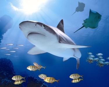 Sea Life | 2 Entradas Adulto